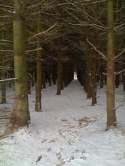 Tree grid