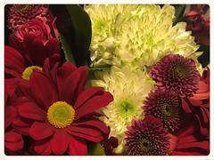 52 weeks project/52 Weeks of Pix 2017: Love (GadgetHead) Tags: 52weeksofpix2017 week7 7 752 love valentinesday valentine appleiphonese iphonese iphone flowers 2017 52weeksproject macro cropped