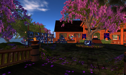 New Jacaranda Trees in front of shop