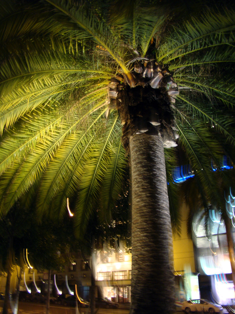 DSC06747 Union Square palm tree