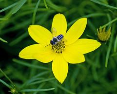 _DSC1107 (pnther60) Tags: backyard floraandfauna