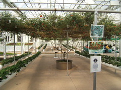 Behind the Seeds Tour (Francesc_2000) Tags: walking orlando epcot tour florida disney seeds disneyworld greenhouse land pavilion behind attraction theland fisheries behindtheseeds hidroponics