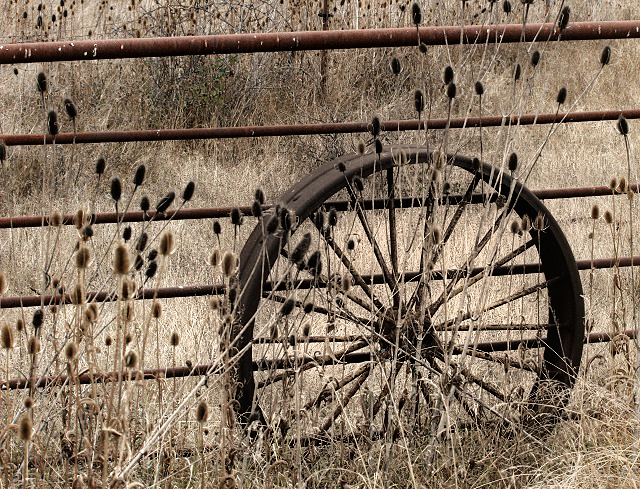 Wheel and Thistles