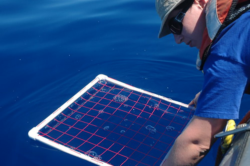 Miriam measuring plastic on the oceans surface. See the little white flecks?