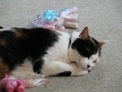 Kitties and Ponies, Part 1 (mamalemma) Tags: cats phoebe mylittlepony