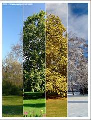 Seasons / Évszakok (FuNS0f7) Tags: hungary seasons sonycybershotdscf828 gödöllő supershot flickrsbest fantasticnature the4elements artofimages évszakok bestcapturesaoi flickrvault exoticimage