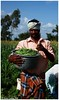 Vitamin Gardens of Kadur!! (Naseer Ommer) Tags: beans farming kerala greenbeans agriculture karnataka waynad vitaminc vitamina vitamink lowcalorie carotenoids phaseolusvulgaris kadur naseerommer concordians gundalpet nutrientrich aaranyakamhomestayresort