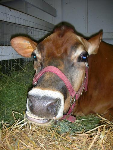 3 - Cow!