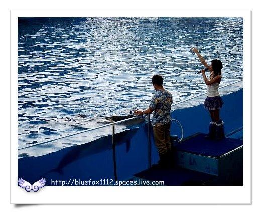090919-2花宜6輪4日遊_花蓮海洋公園10_海洋劇場-海豚秀
