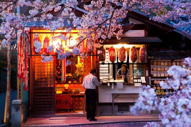 Philosopher's Walk cherry blossom : Kyoto, Japan / Japón