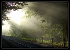 Morning light.... (Levels Nature) Tags: road uk morning light england sunlight nature leaves fog somerset a39 polden saariysqualitypictures poldenhills mygearandme blinkagain