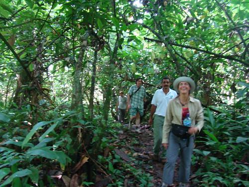 Caminando en el cacaotal
