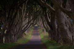 dark heges co antrim northern ireland (plot19) Tags: road uk trees tree forest dark nikon moody britain horror northernireland ballymoney hedges ballycastle coantrim fbdg abcgroup plot19 darkheges darkhedgescoantrim peregrino27newvision