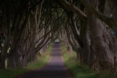 dark heges co antrim northern ireland (plot19) Tags: road uk trees tree forest dark nikon moody britain horror northernireland ballymoney hedges ballycastle coantrim fbdg abcgroup plot19 darkheges darkhedgescoantrim peregrino27newvision