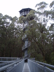 Viewing tower at Otway Fly