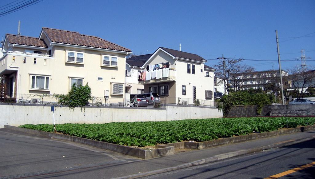 Suburban farming in Japan 7976