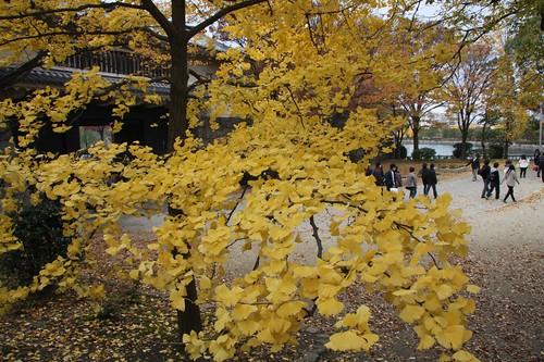 ゆったりと、秋愛でる