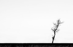 (kellinasf) Tags: white black tree field space empty minimal explore negative lone simple day232 project365 365community