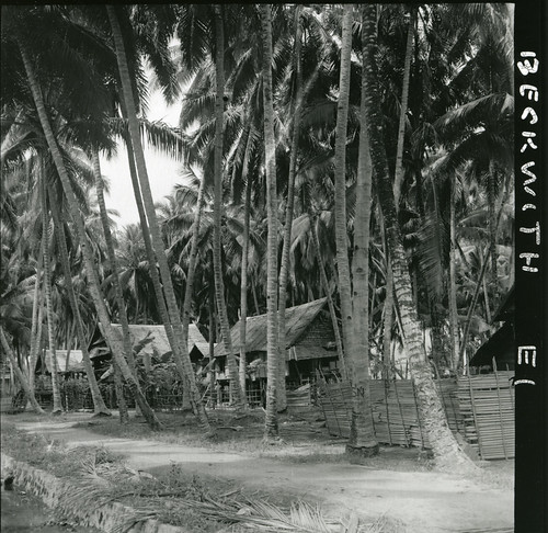 Houses at Palu, Sulawesi