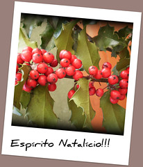 Christmas spirit!!! (Holly) (sandra_matos) Tags: christmas natal holly azevinho