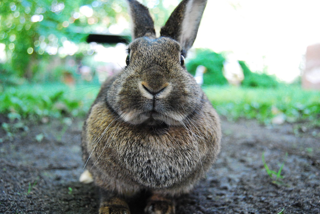 Rabbit ! / Kaninchen! by Robobobobo, on Flickr