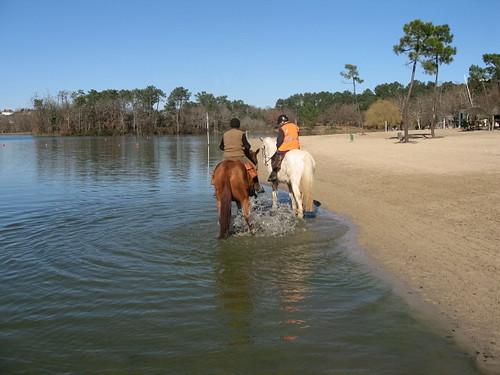 Ballade pour Equine Rescue 4181422991_4fa904b7f4