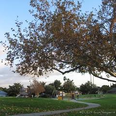 Goldenrod Park