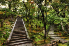 Two Paths Through the Tangled Japanese Forest (Stuck in Customs) Tags: world travel trees two color japan mystery digital forest garden landscape photography japanese blog high nikon kyoto shrine asia dynamic stuck natural grove path steps enigma september growth  sacred mysterious imperial imaging paths through choice prefecture kamo range 2009 hdr trey travelblog customs tangled honshu temlpe kyto ratcliff   honsh tadasunomori stuckincustoms d3x osakakobekyoto kamojinja kytofu keihanshin  forestofcorrection