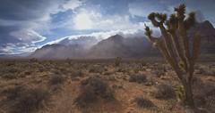 Red Rock Canyon Storm-Panorama, Las Vegas, NV (D Breezy - davidthompsonphotography.com) Tags: redrockcanyon winter cactus panorama sun snow storm cold nature clouds canon landscape desert wind lasvegas nevada joshuatrees mojavedesert 1740f4l clarkcounty 1740mml 5dmarkii canon5dmarkii