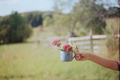 lúky, kvety, zelená tráva