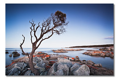 Binalong Bay Tree, Tasmania, Australia (Matthew Stewart | Photographer) Tags: ocean blue sunset red sea sky colo