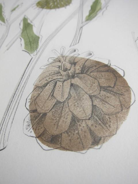 Pine cone detail