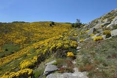 Massif de l'Aigoual - Idéal pour la randonnée  (Cévennes) #fb