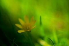 (sis Martins) Tags: flores amigos 2009