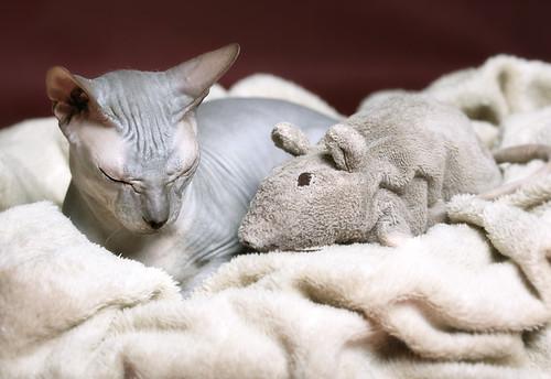 Брюса и Крыса