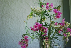 bouquet (bluesaepe) Tags: sweetpea wildflowers queenanneslace