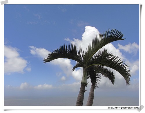 Clouds and Palm Trees