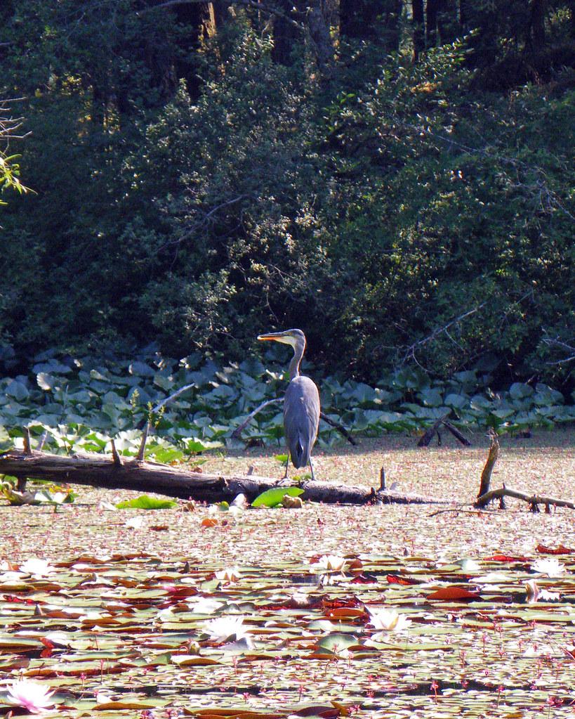 2009-07-29-Thetis Lake 025