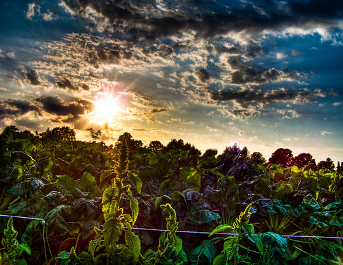 Vegetable Sunset by Thomas Euler.