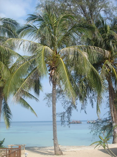 Palm trees on Haad Salad, Ko Pha Ngan