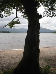 Oak (La Orden del Camino) Tags: trekking way scotland hiking escocia highland wandern lochlomond westhighlandway thewesthighlandway escursionismo randonnepdestre laordendelcamino senderismoenescocia