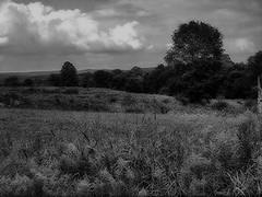 treerightBWmidnight (Hood Ornaments) Tags: field landscape tennessee goldenrod savannah countryscene cumberlandcounty whitecounty