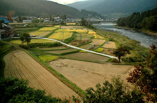 Rice Fields in September