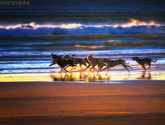 Running Free - Pack of Street Dogs on the beach Part 3 (Onironauta...) Tags: sunset dog sun beach dogs argentina sunrise libertad freedom sand buenosaires waves joy free playa arena perro perros olas libre mardelplata mdq pandilla mdp streetdogs streetdog beachdogs perroscallejeros dograce dogsonthebeach doggang runningfree racingdogs jauria packofdogs sandrog onironauta carreradeperros claudioar gangofdogs perrosenlaplaya perroscorriendo raceofdogs pandilladeperros grupodeperros