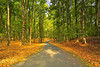 would you like to take a walk with me? (tropicaLiving - Jessy Eykendorp) Tags: autumn bali green nature pine forest garden indonesia landscape colours scene efs1022mm bedugul outdoorphotography canoneos50d bedugulbotanicalgarden bwcpl tropicaliving kebunrayaekakarya rawproccessedwithdigitalphotopro tiffproccessedwithadobephotoshopcs3 wouldyouliketotakeawalkwithme