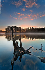 Rising with dawn (Rob Orthen) Tags: trees sky mist lake reflection forest sunrise suomi finland landscape dawn still nikon europe scenic rob tokina scandinavia dri hdr kanto maisema vesi mets nuuksio pinkclouds syksy pinta d300 heijastus 1116 orthen lakefinland roborthenphotography tokina1116 tokina1116mm28