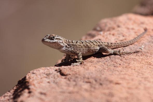 101609_lizard