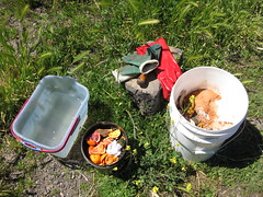 week two_compost making