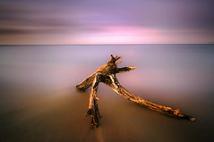 Driftwood Giraffe (dan barron photography - landscape work) Tags: ocean longexposure sunset sea moon still quiet purple web cyan magenta calm full driftwood hues