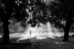 Recharged with Nature (navid bin sakhawat) Tags: light sun man tree garden dhaka bangladesh gettyimagesbangladeshq2